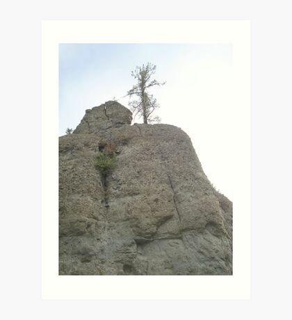 Tree on Sandstone Outcrop Art Print