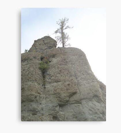 Tree on Sandstone Outcrop Metal Print