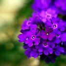 Sweet Spot by Kasia-D