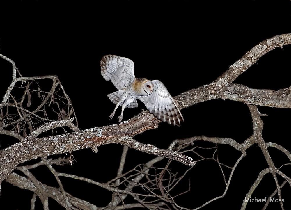 Barn Owl In Flight by Michael  Moss