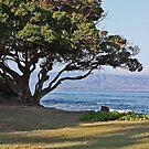 Honokowai Park Beach West Maui, Hawaii by sandra greenberg