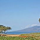 Honoapiilani  Beach - Island of Lanai by sandra greenberg