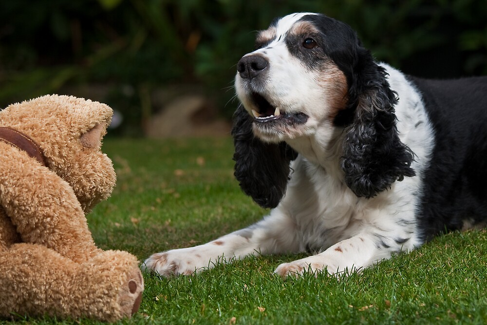 Love My Teddy by Stephen Morhall