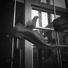Pigeon in a Shoe by Jim Fisher