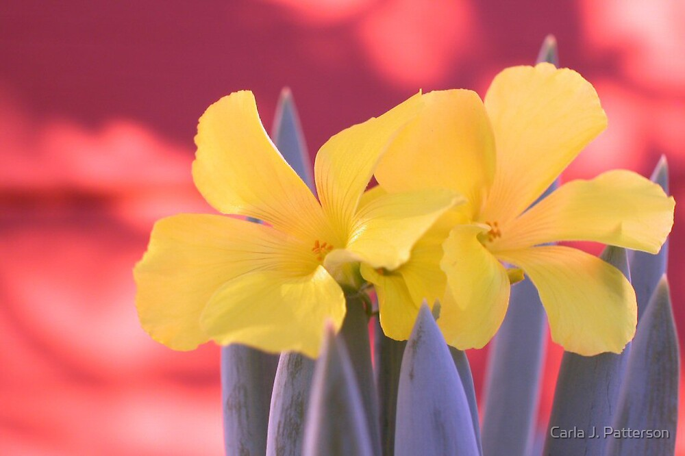 Primary Pastels by Carla J. Patterson