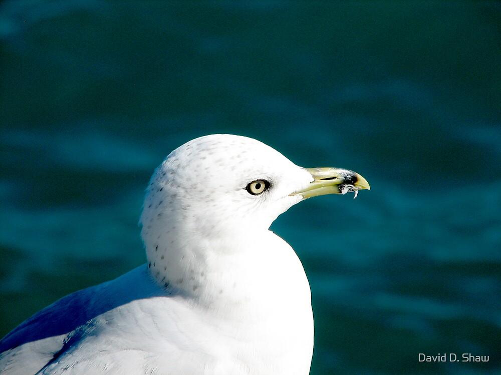 seagull by David Shaw