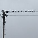 Birds on a Wire by Jim Fisher