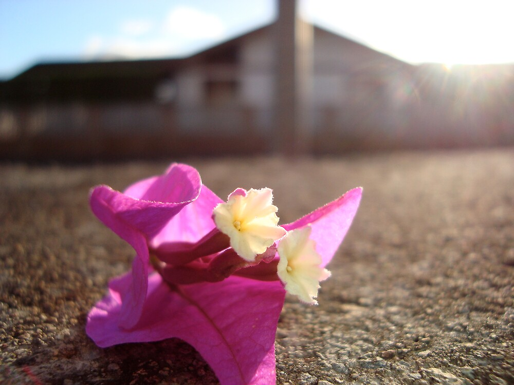 Flower in the Road by Ilio
