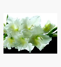 Black & White Gladiola Photographic Print