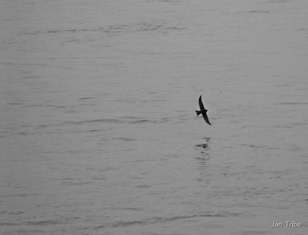 Lone Flight by Jan  Tribe