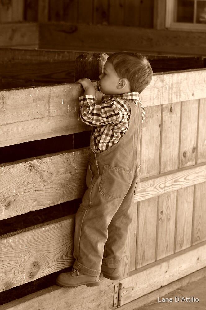 In The Barn by Lana D'Attilio