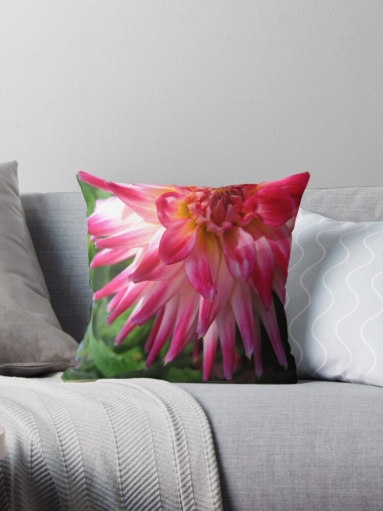 Dahlia Perfection no.2 by Orla Cahill Photography