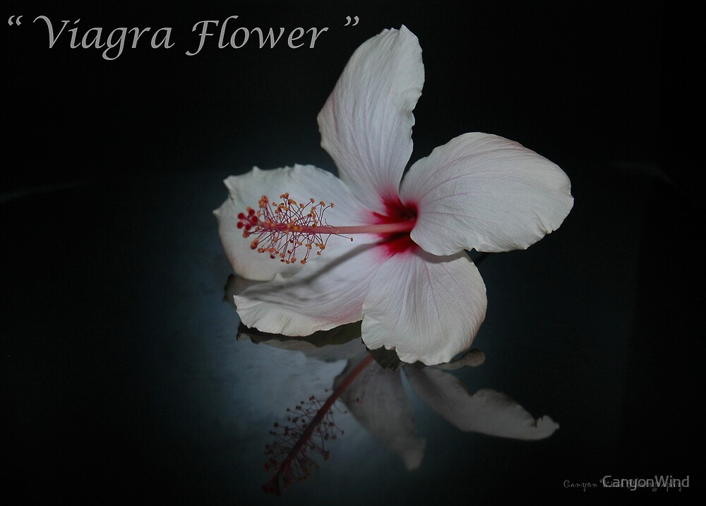 """ The Viagra Flower "" by CanyonWind"