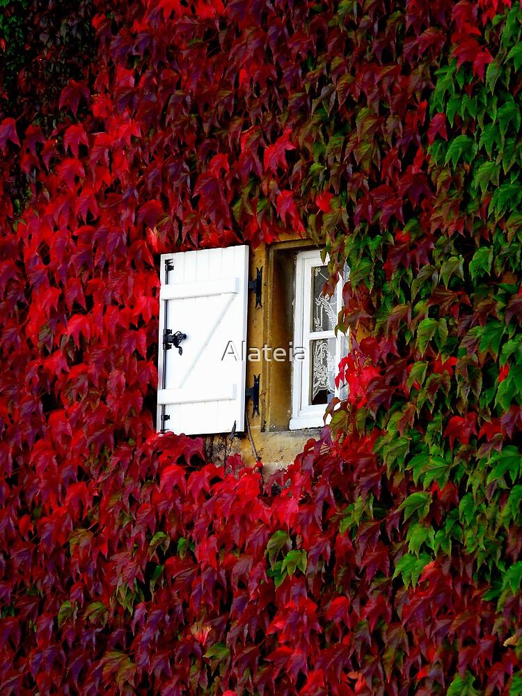 SIDE WINDOW by Alateia