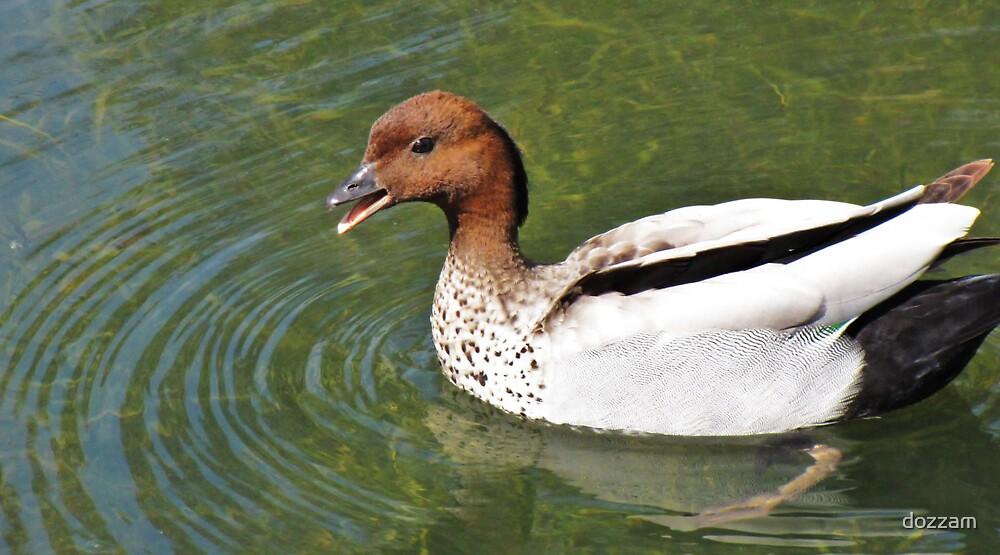 Duck by dozzam
