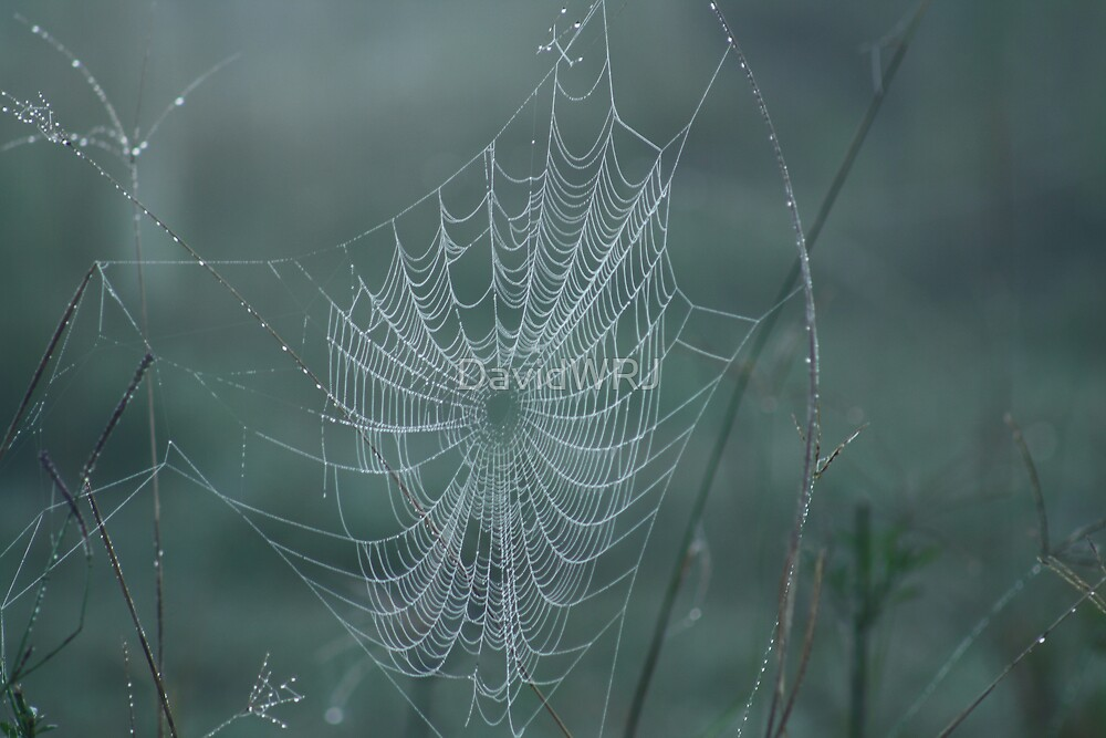 Web by DavidWRJ