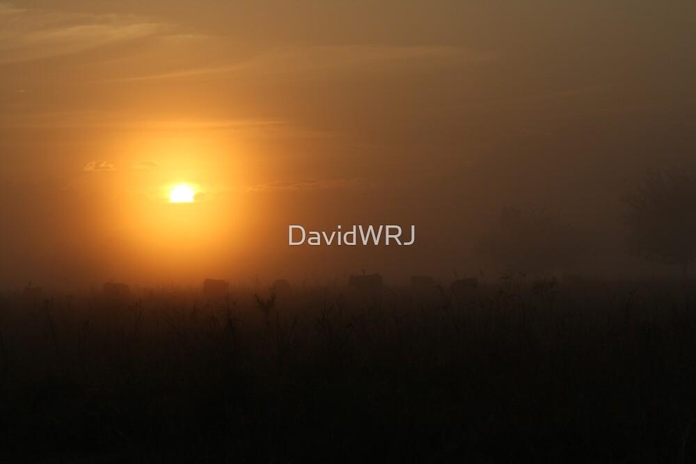 Sun Rise by DavidWRJ