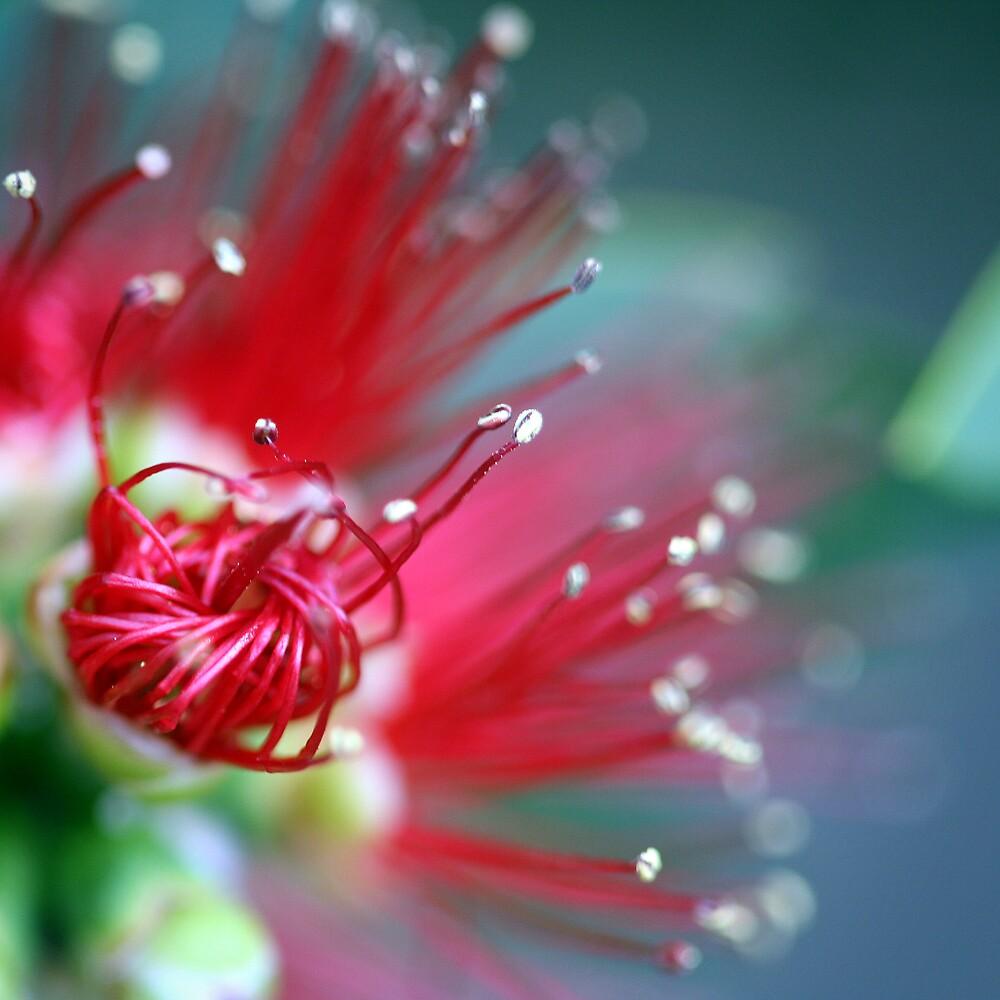 red burst by lorelle