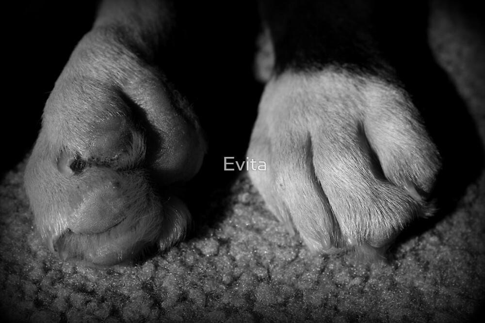 Baby-Boxer-Tatzen - Boxer-Hunde-Reihe von Evita