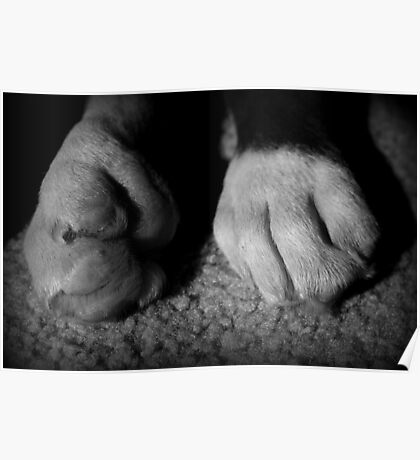 Baby-Boxer-Tatzen - Boxer-Hunde-Reihe Poster