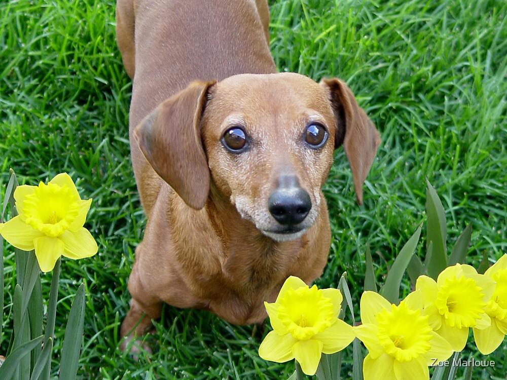 Rusty In The Daffodils by Zoe Marlowe