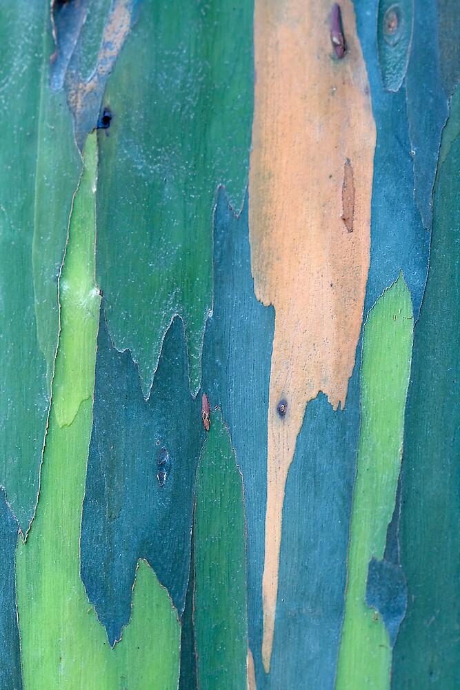 Myrtaceae by Ann  Palframan