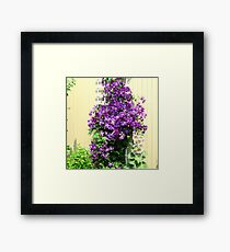 Country Posies Framed Print