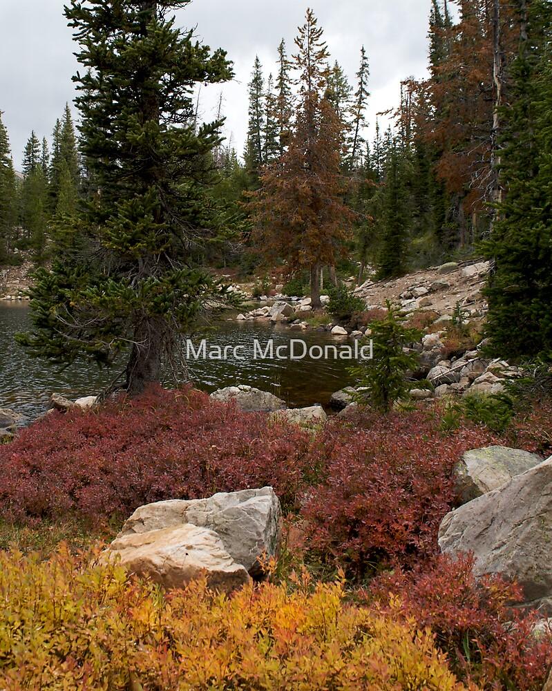 Lakeside Foliage by Marc McDonald