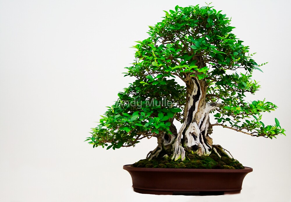 Green Bonsai by Andy Mulley