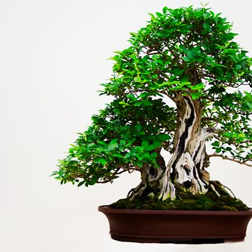 Green Bonsai by AndeanGnat