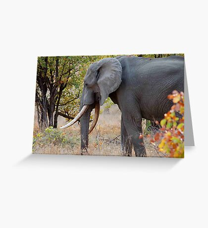 """TUSKERS OF """"THE KRUGER NATIONAL PARK"""" Greeting Card"""