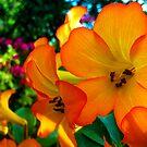 Orange by Hayley Barker