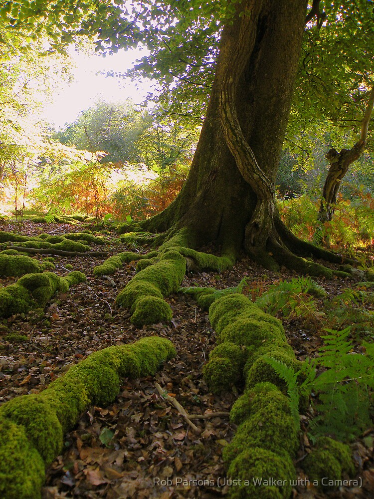 The New Forest: Mossy Roots by Rob Parsons (AKA Just a Walker with a Camera)