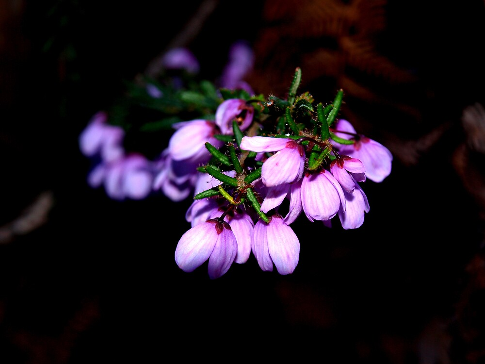 spring in tas, sept. by gabileigh-