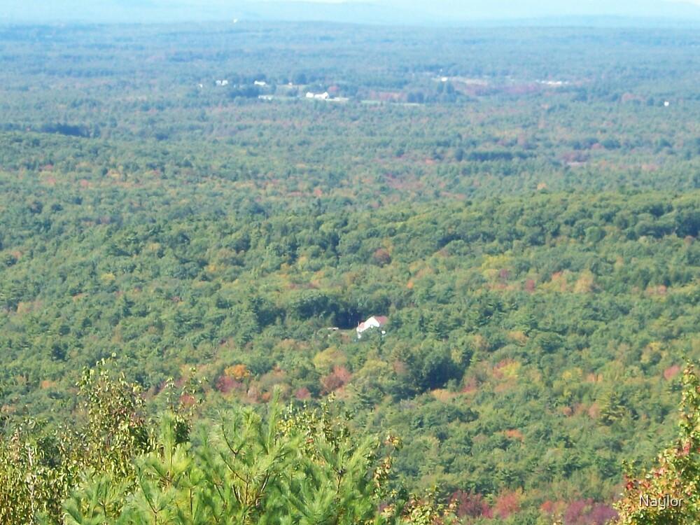 Beginning of Leaf Peeper Season here in Maine by Naylor