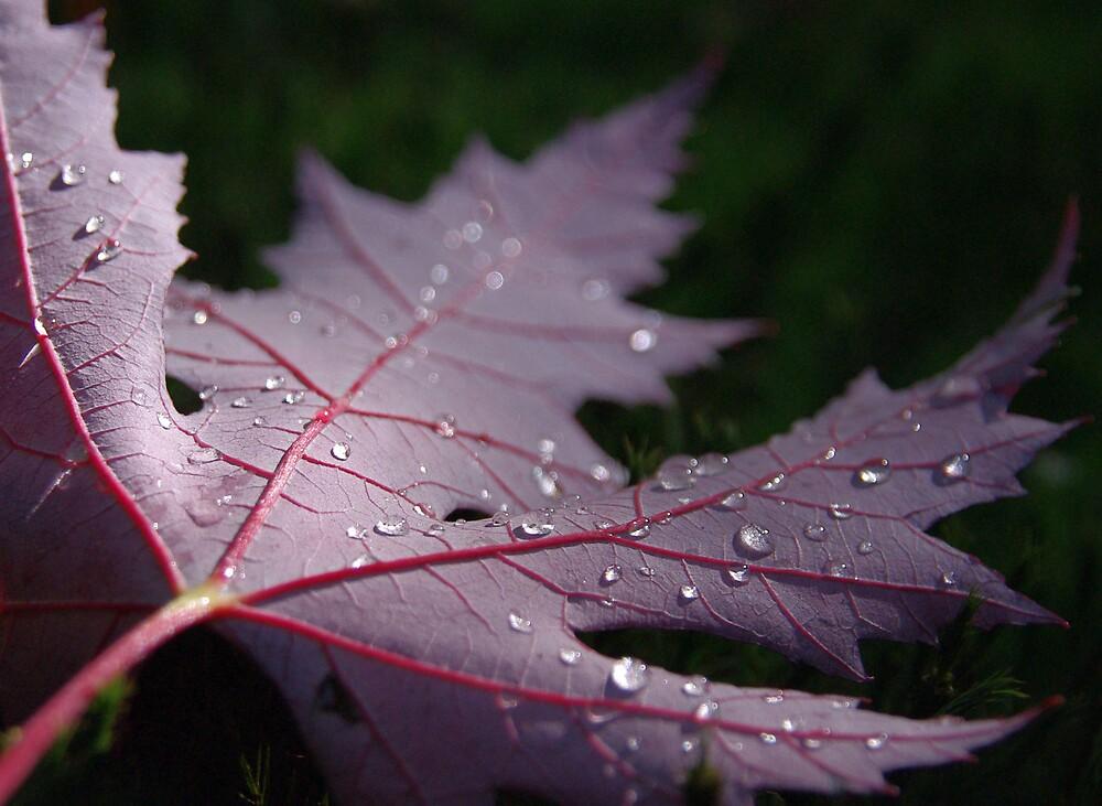 Autumn Leaf by Freewilly