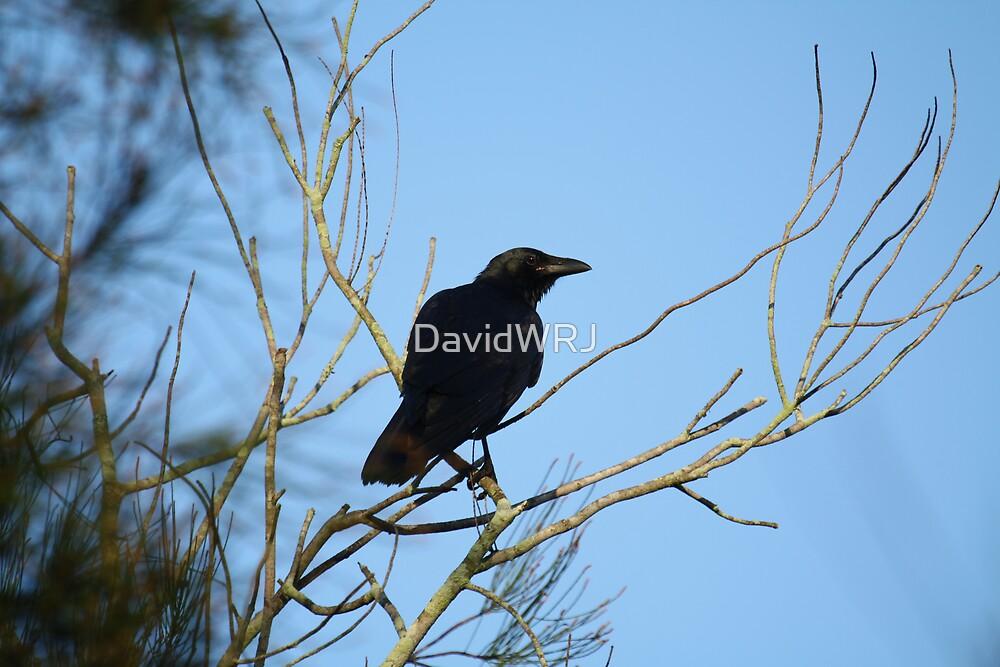 The Crow by DavidWRJ