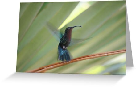 humming by Denny  Willis
