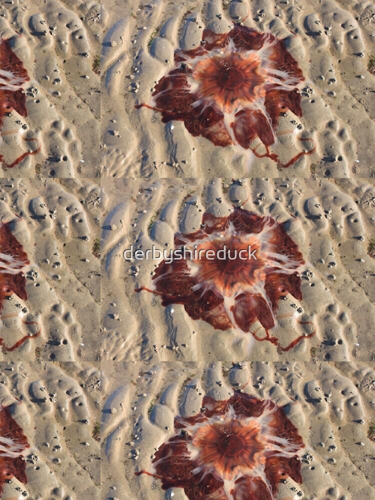Stunning red jellyfish at Maidens Beach by derbyshireduck