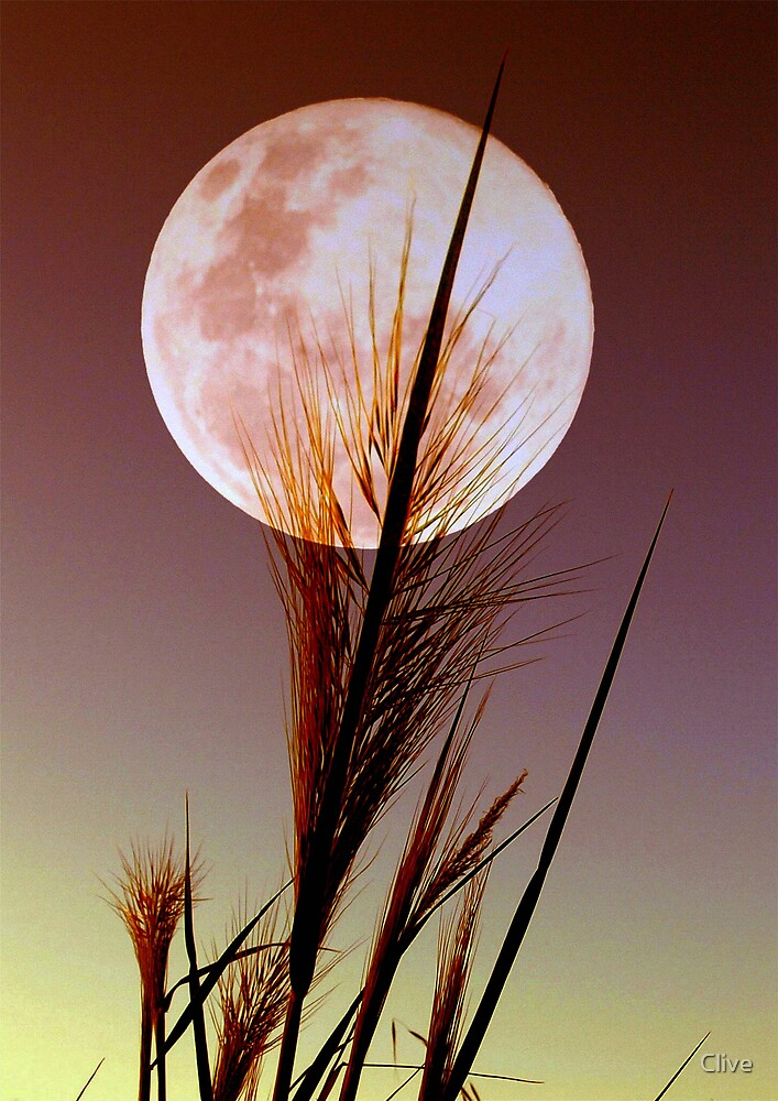 Moon Reeds by Clive