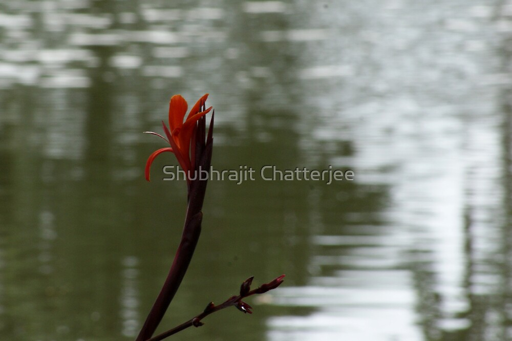 Flower in a pond by Shubhrajit Chatterjee