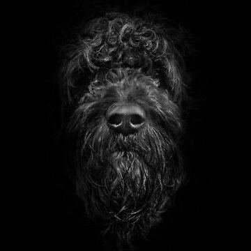 Ziggy Portrait No 2 by learningcurveca