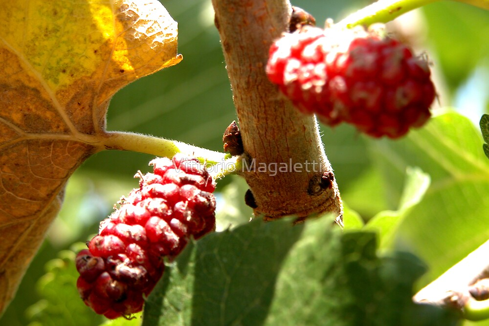 Mulberries by Vittorio Magaletti