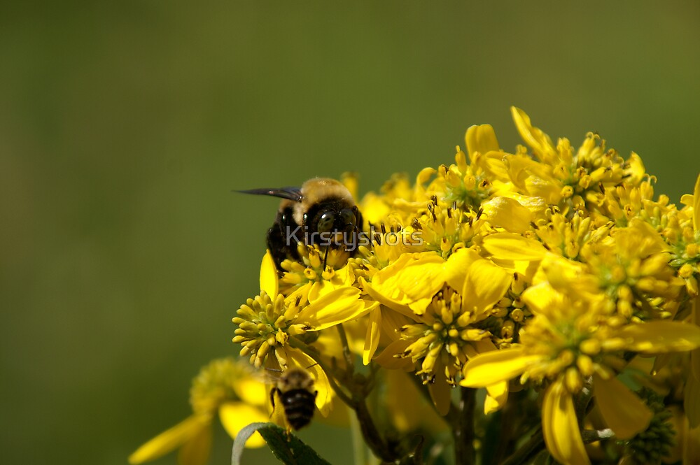 Second Bee by Kirstyshots