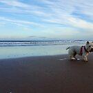 Warkworth Beach by Ciaran O'Hagan