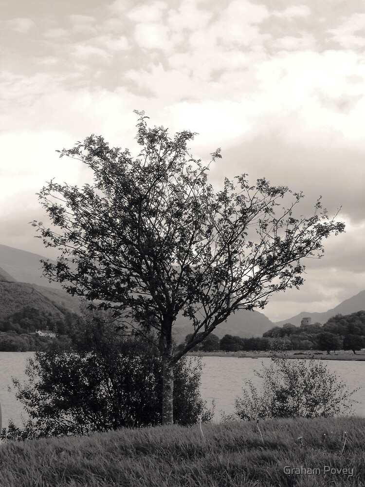 Mountain Ash by Graham Povey