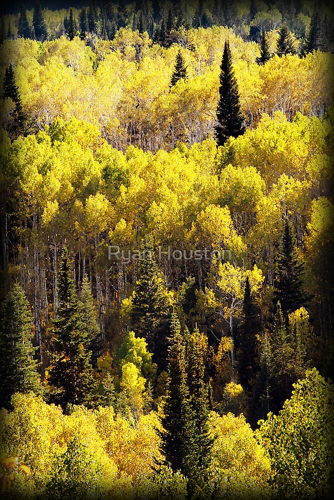 Aspens and Pine Trees - Alpine Loop by Ryan Houston