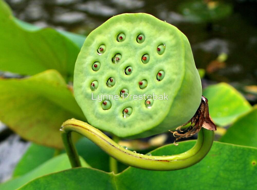funny aquatic plant by Lynne Prestebak