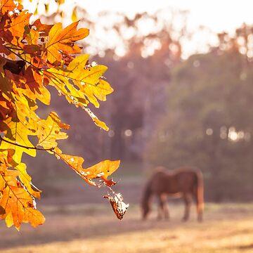 Autumn Feelings by andreaanderegg