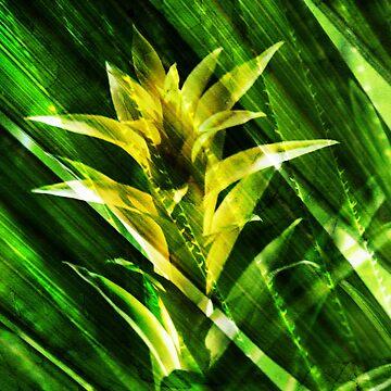Tropical by cafelab